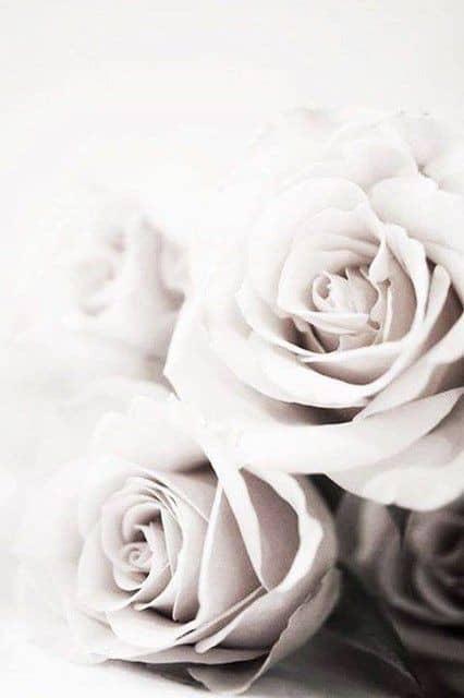 rose wallpaper iphone