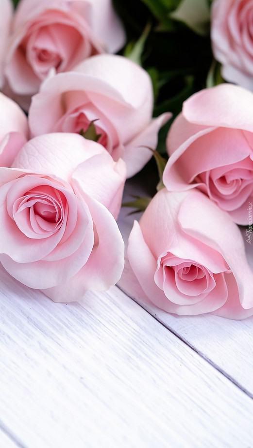 rose wallpaper iphone light pink